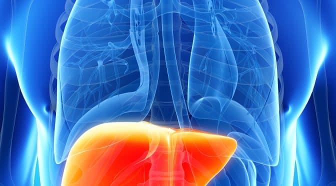 Méridien du foie : le trajet énergétique, et ses manifestations 1